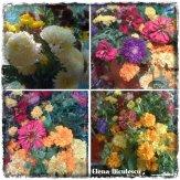 collage flori 19 nov