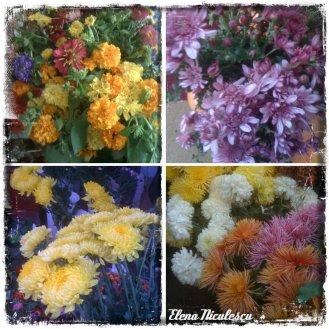 collage flori 31 oct