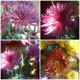 collage flori 7 nov