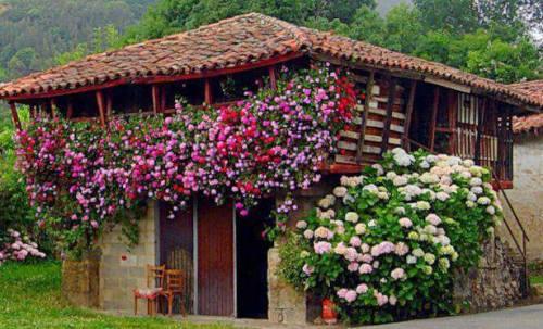 casa cu flori de pictat
