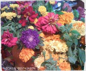 flori de toamna img_2155 dec