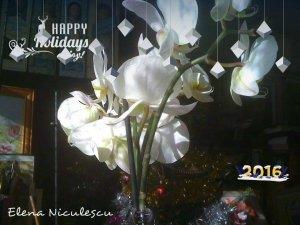 orhideea alba 14 cu an nou