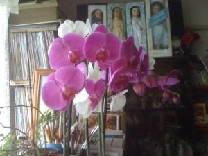 orhidee-ff2