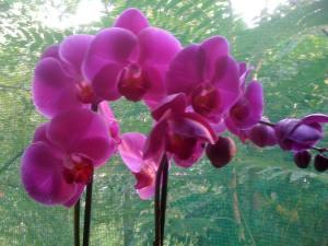 orhidee-ff3