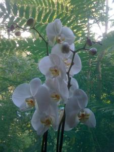 orhidee-ff4