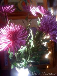 crizanteme-cu-tablou