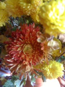 crizanteme-ff