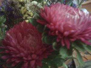 crizanteme-roz