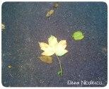frunze-oct