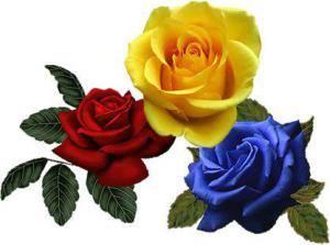 tricolor-trandafiri