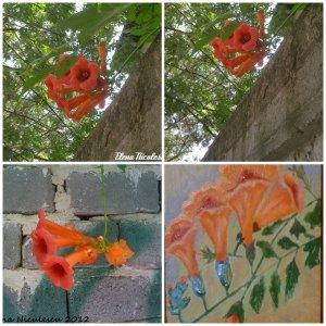 collage-cu-luleaua-turcului
