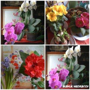 collage-cu-flori-19-febr