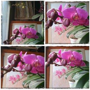 collage-cu-orhidee-4-febr-a