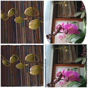 collage-cu-orhidee-4-febr