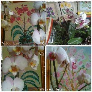 collage-cu-orhidee-albe-si-picturi