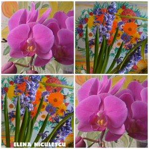 collage-cu-orhidee-si-zambile-11-febr