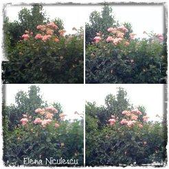 collage trand roz 3 iunie