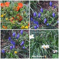 collage flori grad 8 apr