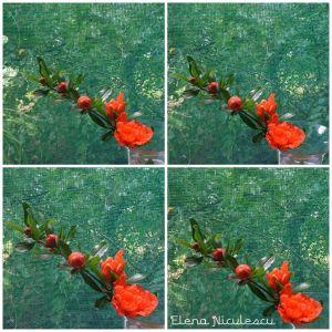 colaj 9 iunie flori de rodiu la geam