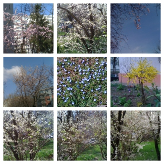 BeFunky-collage spring